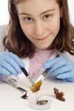 Menina que olha a câmera e que inspeciona borboletas fotos de stock royalty free