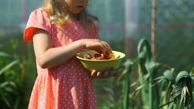Menina que olha a morango fresca em uma exploração agrícola filme