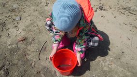 Menina que olha na cubeta com os peixes vídeos de arquivo