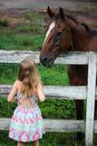 Menina que olha o cavalo Fotos de Stock