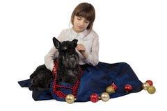 Menina que põe decorações do Natal sobre um cão, Schnauzer diminuto foto de stock