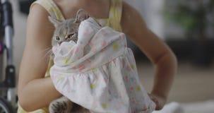 Menina que põe a roupa sobre o gato video estoque