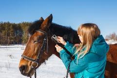 Menina que penteia a juba preta do cavalo com um pente fotos de stock