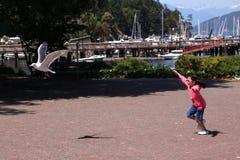 Menina que persegue a gaivota Fotos de Stock Royalty Free