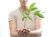 Menina que prende a árvore pequena Fotografia de Stock