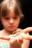 Menina que prende a aranha marrom na palma de sua mão Imagem de Stock