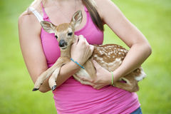 Menina que prende a jovem corça pequena Fotografia de Stock Royalty Free