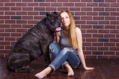 Menina que senta-se perto da parede de tijolo ao lado do cão Cane Corso Imagem de Stock Royalty Free