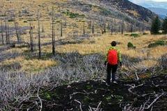 Menina que treeking através de uma floresta queimada Imagens de Stock
