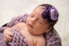 Menina recém-nascida de sono com a faixa roxa da flor Imagens de Stock