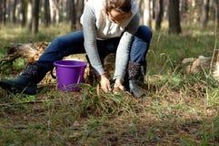 A menina recolhe cogumelos imagem de stock royalty free