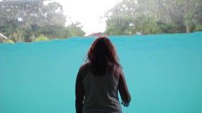 A menina senta-se e olha-se através do vidro, a mostra da água com os elefantes na associação filme