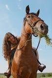 A menina senta-se em horseback Fotos de Stock Royalty Free
