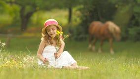 A menina senta-se em um esclarecimento, vira-se as flores selvagens rasgadas e faz-se um ramalhete delas Movimento lento video estoque