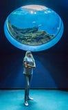 Menina sob o aquário Foto de Stock