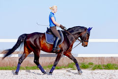 A menina vai em um cavalo marrom imagens de stock