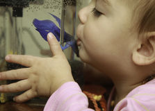 a menina 2yr beijou seus peixes amados de Betta Fotos de Stock