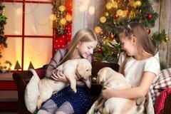 Meninas bonitos que guardam cachorrinhos de Labrador fotografia de stock