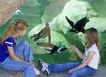 Meninas e pinguins Fotos de Stock Royalty Free