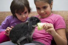 Meninas que alimentam lhe o coelho do animal de estimação imagem de stock royalty free
