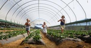Meninas que correm com a cubeta das morangos na exploração agrícola 4k video estoque