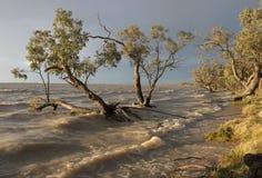 Menindee sjöar NSW. arkivfoton