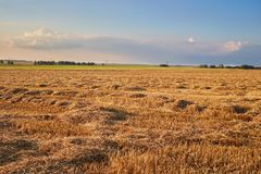 Mening aan graangewassengebied Stock Fotografie