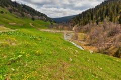 Mening aan uitlopers van de bergen van de Kaukasus over bloemen dichtbij Arkhyz Stock Foto