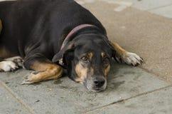 Mening av hunden no2 Royaltyfri Bild