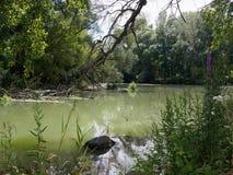 Mening bij de alluviale gebieden van Donau in Slowakije Stock Fotografie