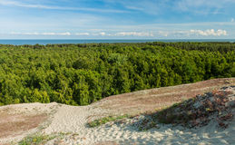 Mening bij het groene bos van hoog duin Royalty-vrije Stock Afbeeldingen