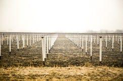 Mening bij wijngaard met witte pijlers op grond royalty-vrije stock foto's