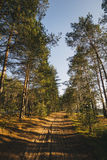 Mening binnen van het bos op de bomen Stock Foto