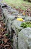 Mening die onderaan een steenmuur kijken met de herfstbladeren en mos stock foto's