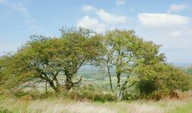Mening door de bomen royalty-vrije stock afbeelding
