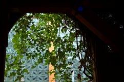 Mening door een venster met het hangen van installaties stock afbeelding