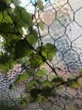 Mening door geweven venster van wijnstokken, draad en een spin Royalty-vrije Stock Fotografie