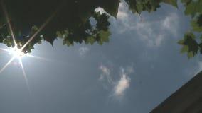 Mening door het bomen groene blad de zonnige dag stock footage