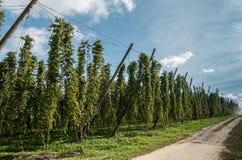 Mening langs hopgebied in Bewezen België stock afbeelding