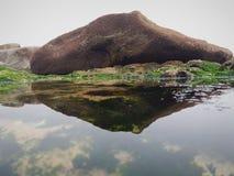 Mening langs rotsen, algen, overzeese, kiezelsteen en overzeesschepselen stock foto