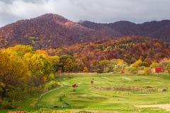 Mening Mooi Autumn Season in Japan Royalty-vrije Stock Foto's