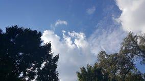 Mening omhoog bij de hemel van gazonbomen Stock Foto's