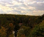 Mening over bos in de zomer Royalty-vrije Stock Fotografie