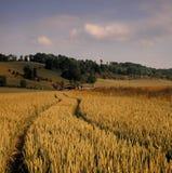 Mening over cornfield landbouwlandschap royalty-vrije stock afbeeldingen