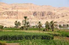 Mening over de Tempel van Hatshepsut. Stock Foto's