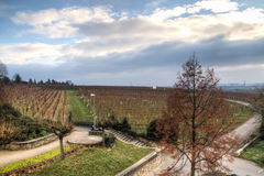 Mening over de wijngaarden in Hochheim, Duitsland Royalty-vrije Stock Afbeelding
