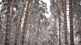 Mening over een sneeuw bosspar, pijnboom, berk - alle hoge die bomen met sneeuw worden behandeld Mooie ijzige dag waarin u stock footage