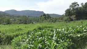 Mening over gebieden met groenten van berg en huis van landbouwers Bali, Indonesië stock video