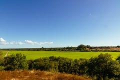 Mening over grote groene rijstaanplanting in Santerem, Setubal, Portugal Stock Afbeeldingen
