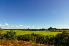 Mening over grote groene rijstaanplanting in Santerem, Setubal, Portugal Stock Afbeelding
